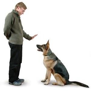Profesjonalne szkolenie psów WARSZAWA