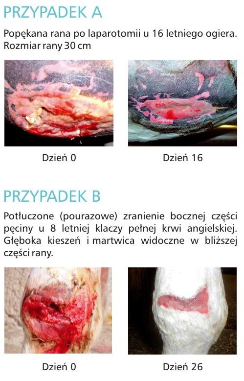 Anigran doskonały preparat na rany psa kota tanio Hurtownia Warszawa