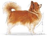 Karma ROYAL CANIN dla Chihuahua