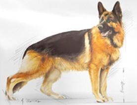 Karma ROYAL CANIN dla Owczarka Niemieckiego